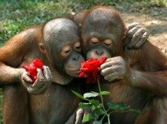 smell-roses